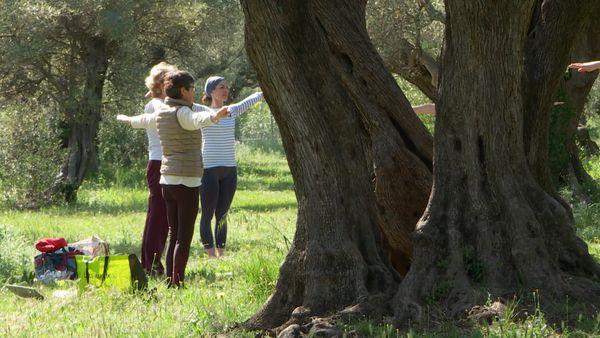L'oliveraie des Laures à la Farlède où les promeneurs peuvent se reposer ou faire du sport.