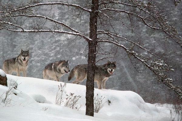 Parrain de l'édition 2012 du festival de la photo animalière et de nature de Montier-en-Der
