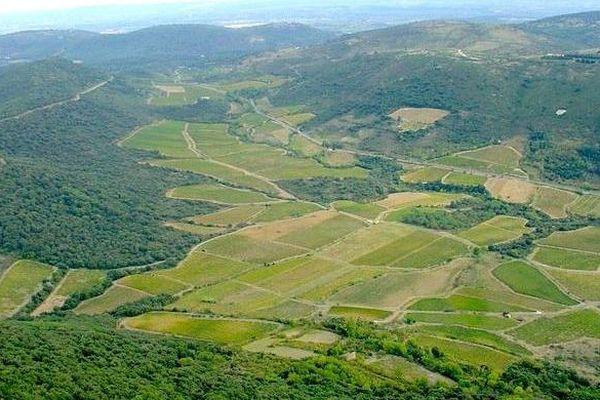 Une partie du vignoble de Cabrières, autour de la route qui mène à Clermont l'Hérault (34)