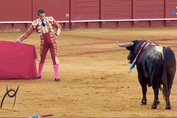 La faena de Manzanares le 16 avril dernier à Séville est également au menu de Signes du toro!