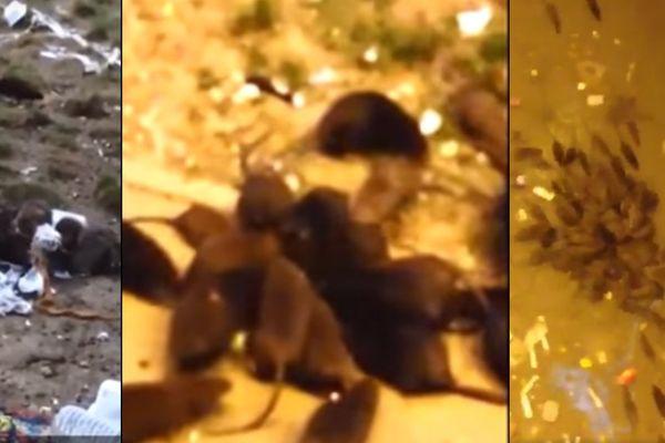 Des images prises par des détenus de la prison de Sequedin.