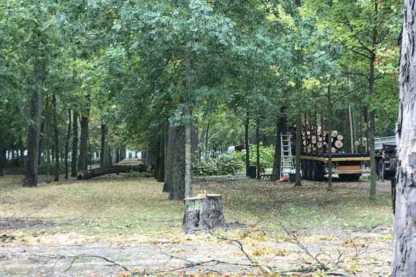 Au niveau de l'hôtel de police de Reims, l'abattage a débuté ce lundi 28 septembre, au grand dam des écologistes