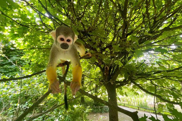 La vallée des singes retrouve ses visiteurs