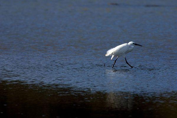Des dizaines d'espèces d'oiseaux sont à observer dans la réserve naturelle de la Baie de Saint-Brieuc