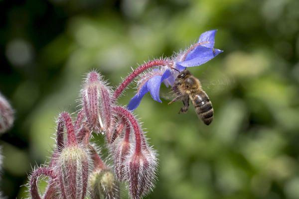 """Un couple d'apiculteur du village de Pignols (Puy-de-Dôme) a reçu des plaintes du voisinage, au sujet des déjections d'abeilles. Le maire du village Christophe Georges, a fait savoir son """"ras-le-bol"""" avec un post sur Facebook partagé plus de 30 000 fois."""