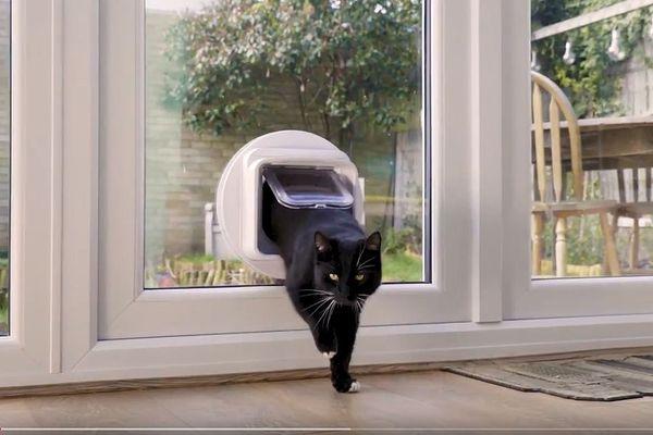 Les chatières connectées ne s'ouvrent que lorsqu'elles reconnaissent la puce électronique de votre animal, ce qui empêche d'autres animaux d'entrer chez vous.