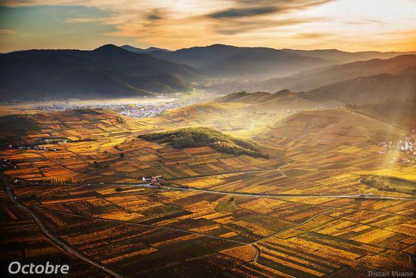 La Route des Vins d'Alsace.