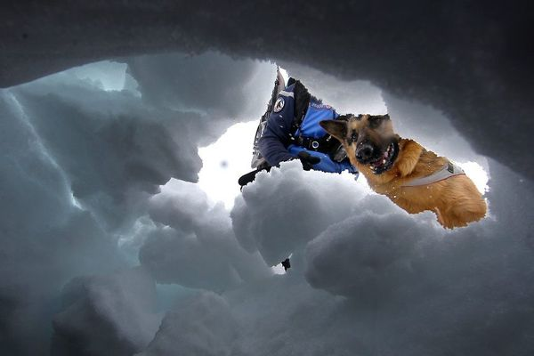 Pour les chiens d'avalanche, chercher une personne ensevelie relève du jeu.
