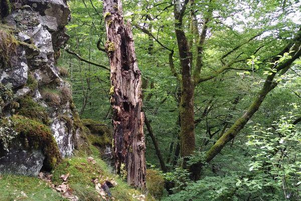 Les 20 000 euros de récompense devraient permettre, entre autres, l'acquisition de parcelles de vieilles forêts dans les gorges de la Rhue, dans le Cantal