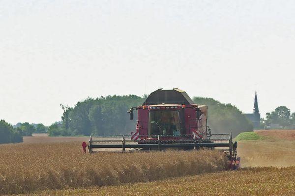 Moisson à Mesnil-sur-Iton (Eure) dans un des champs de la ferme de Nadège Petit