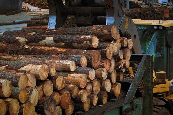 L'activité des scieries est très fluctuante, tributaire de la reprise des marchés et des négoces de bois.
