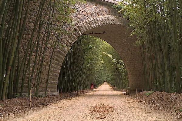 Un silence assourdissant... dans la bambouseraie d'Anduze désertée. avril 2021.