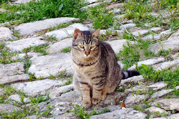 Des chats victimes de maltraitance à Besançon.