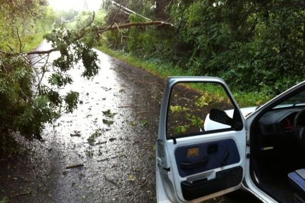 Des branches sur une route près du haras du Pin dans l'Orne