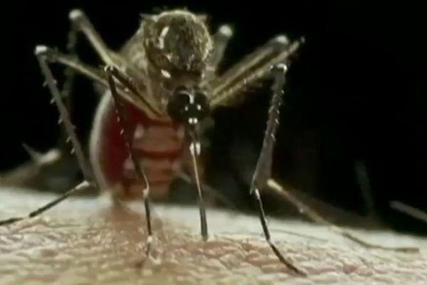 Un moustique femelle peut potentiellement donner naissance à près de 3000 petits.