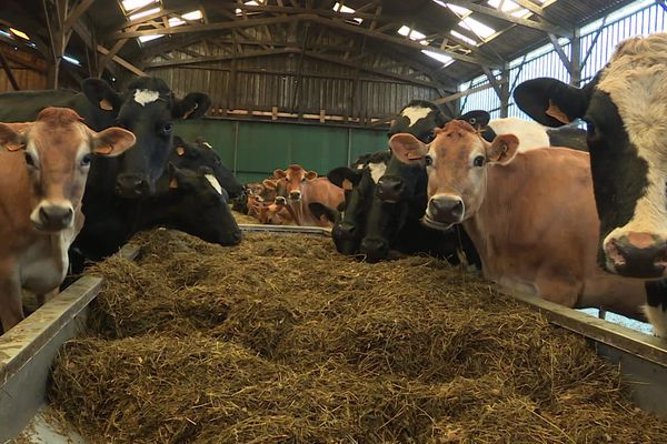 La marque équitable Faire France compte une centaine d'éleveurs adhérents en Bretagne