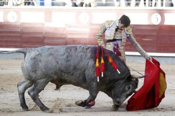Fortes avec Mucamo. La passe naturelle d'un torero parvenu à maturité