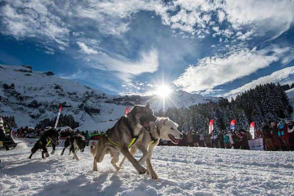 Chaque année La Grande Odyssée Savoie Mont Blanc attire un public nombreux venu admirer les attelages.