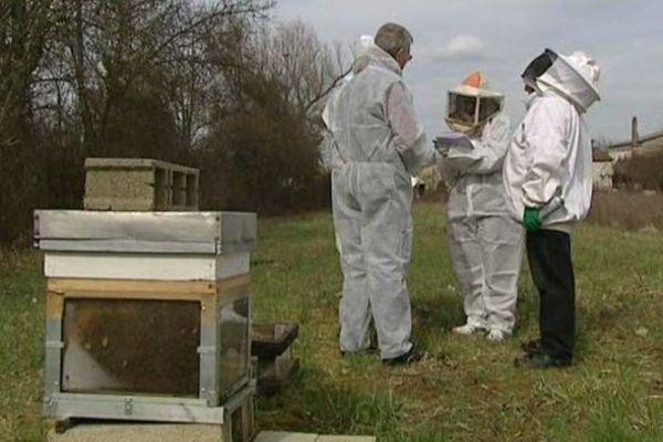 Les apiculteurs comptent toujours plus de morts dans les ruches