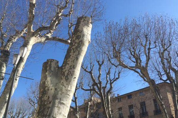 Les premiers platanes coupés sur le cours Mirabeau, à Aix-en-Provence.