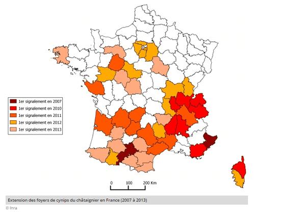 Extension des foyers de cynips du châtaignier en France (2007 à 2013)