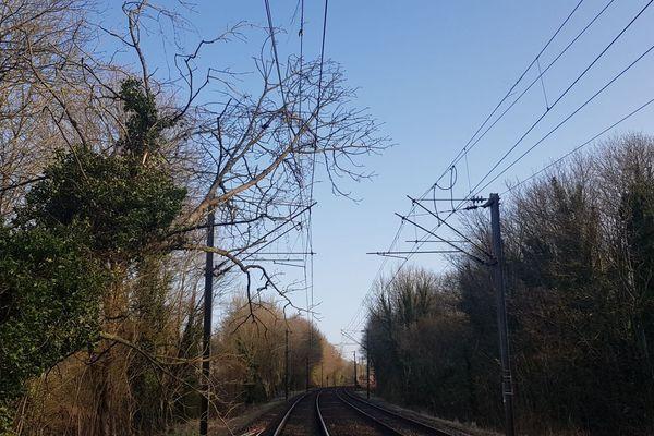 Le réseau ferré francilien a été perturbé par la tempête Ciara. Ici, un arbre s'est effondré sur une caténaire de la ligne P entre La Ferté-sous-Jouarre et Nanteuil-Saâcy.