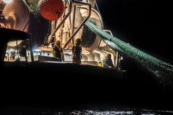 Un dauphin pris dans les filets d'un chalutier. Sea Sheperd a diffusé cette image sur son site internet et les réseaux sociaux.