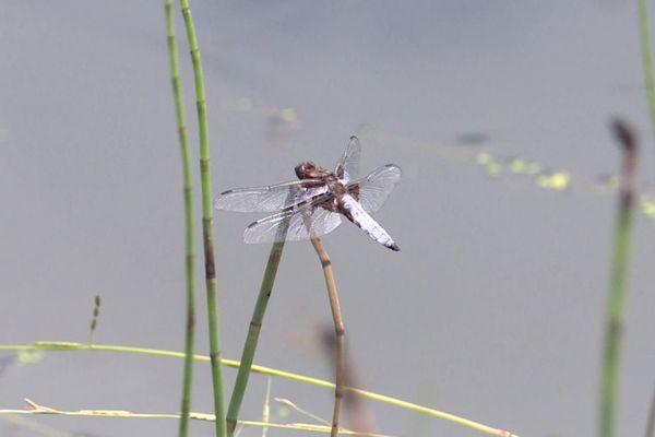 La biodiversité est très riche sur la zone de la narse de Nouvialle.
