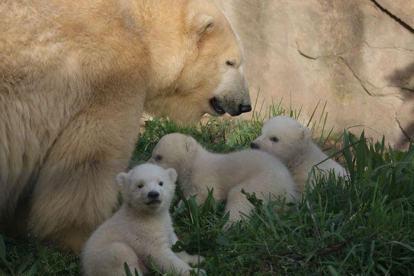 Ces oursons n'ont pas encore de nom.