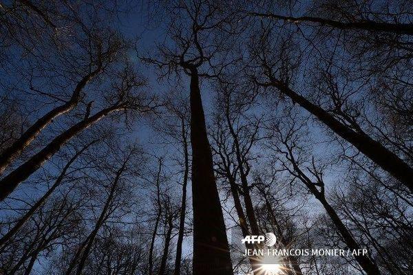 La région Auvergne Rhône Alpes compte deux millions et demi d'hectares de forêts.
