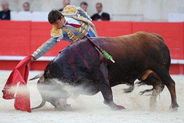 La SPA a déposé plainte contre plusieurs villes à tradition tauromachique, organisateurs de corridas et toreros, considérant ces spectacles comme de la maltraitance animale.