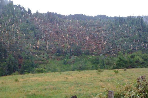 La tornade a arraché de nombreux arbres sur son passage.