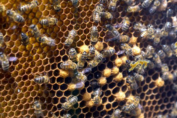 Des abeilles sur le cadre d'une ruche, une installation pour sensibiliser le grand public aux problèmes de l'environnement