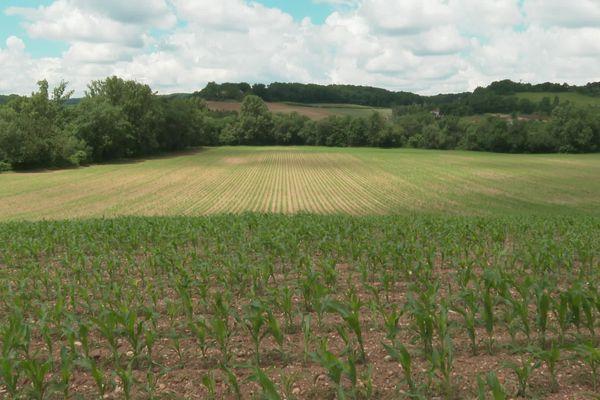 La campagne d'Auvillar (Tarn-et-Garonne)