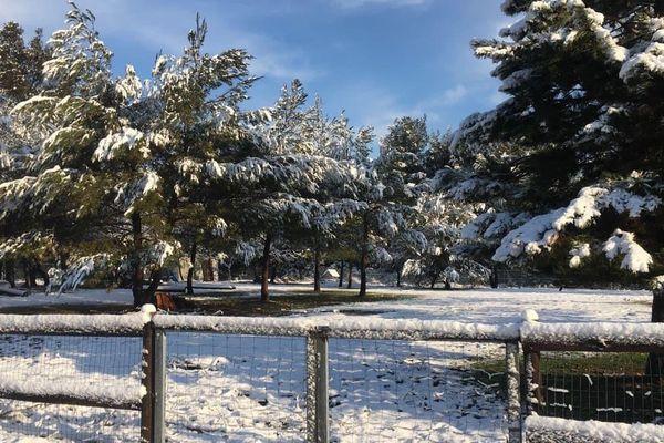 Saint-Victor-des-Oules (Gard) - les sapins sous la neige près d'Uzès - 26 mars 2020.