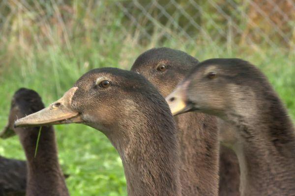 Les Landes est le premier producteur national de foie gras.