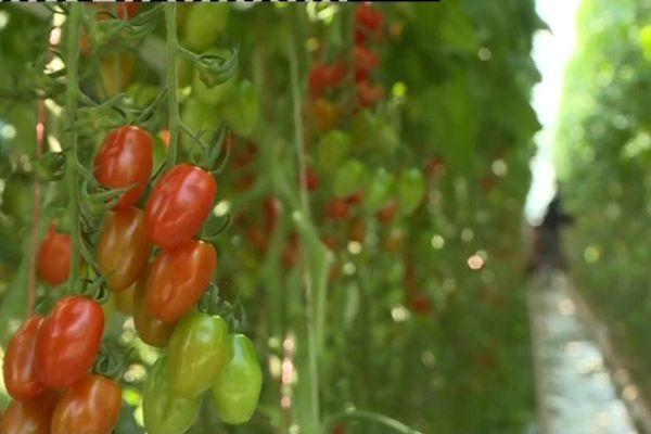 Projet de production de plusieurs milliers de tonnes de tomates à Rosiers d'Egletons