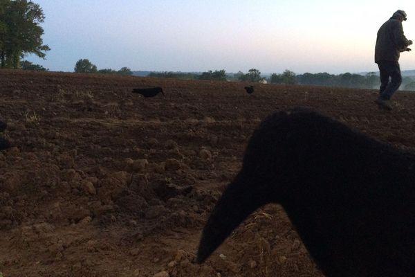Le chasseur dispose des leurres pour attirer les corvidés.