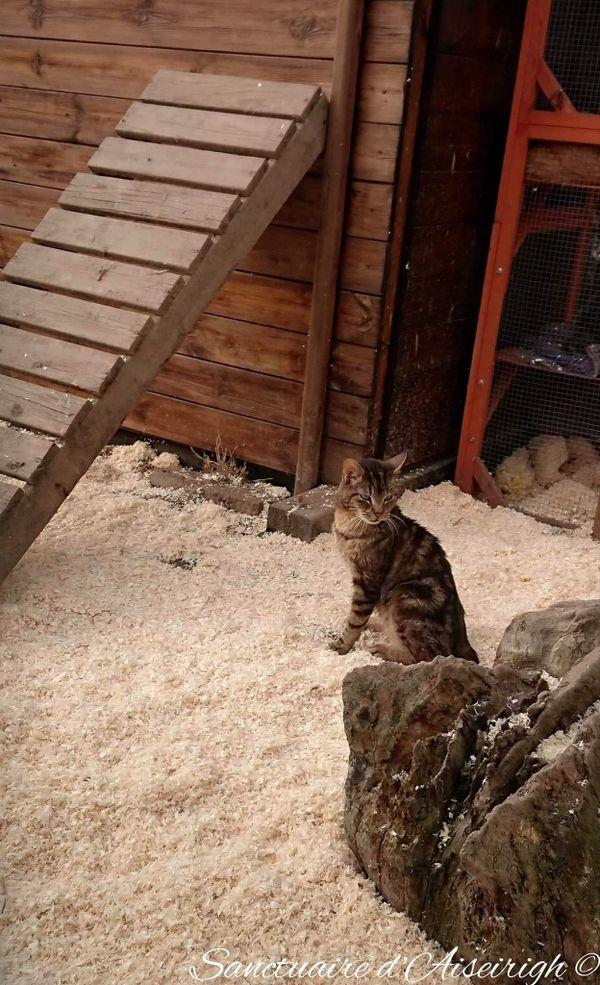Une vingtaine de chats vit au sanctuaire. Ils ont tous été confiés à Julie et François par des refuges qui ne parvenaient pas à leur trouver de foyer, car ils sont inadaptés à la vie de famille.