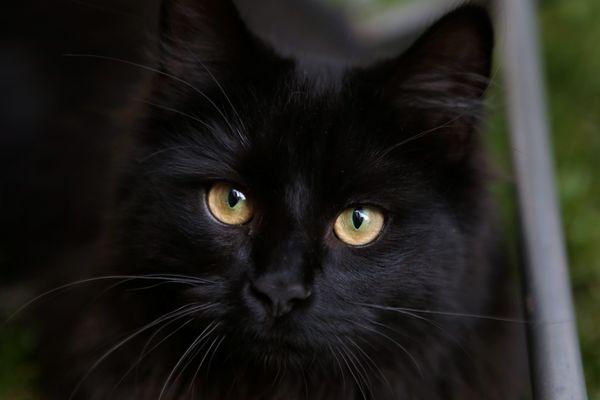 Vénissieux : coincé dans la barre Monmousseau vouée à la destruction, un chat suscite l'émoi sur les réseaux sociaux
