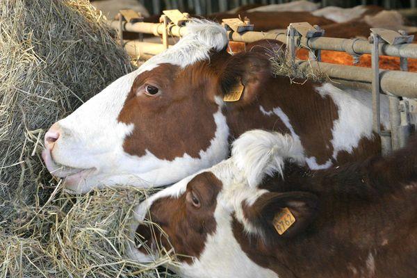 Photo d'illustration-élevage