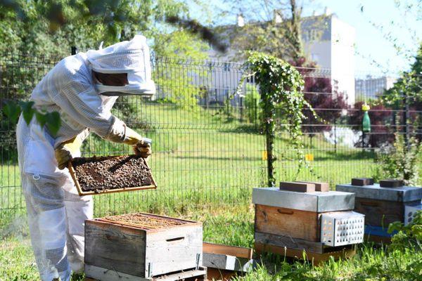 les ruches du commissariat de Limoges.