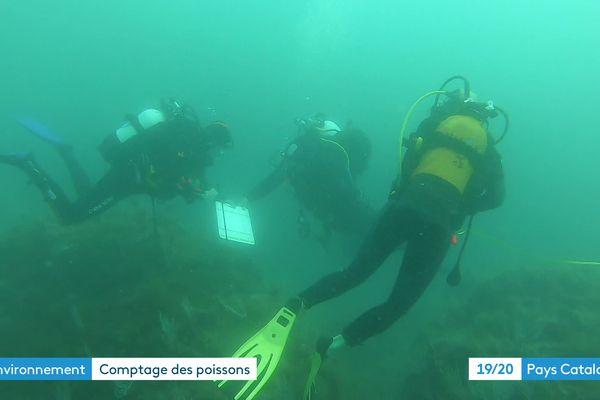 Les plongeurs recensent les poissons de la réserve marine
