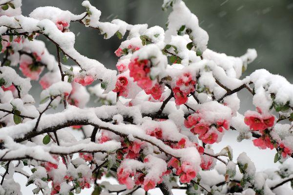 Une remontée brutale des températures est attendue à partir du jeudi 1er mars dans la région Auvergne-Rhône-Alpes