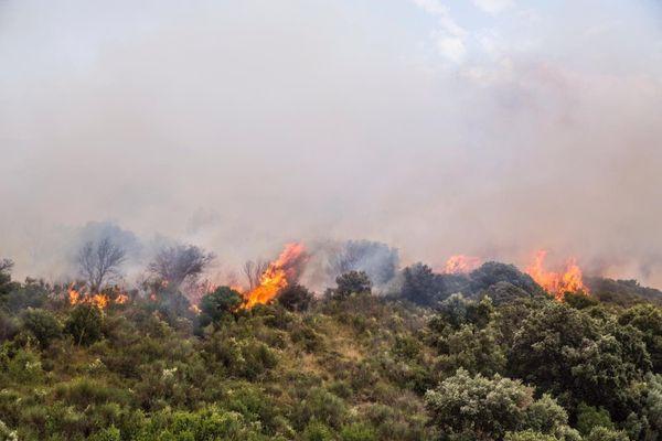 Une trentaine d'hectares ont été ravagés à Estagel, dans la nuit du 10 au 11 juillet.