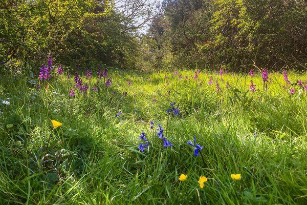Fleurs au printemps, dans le bocage breton.