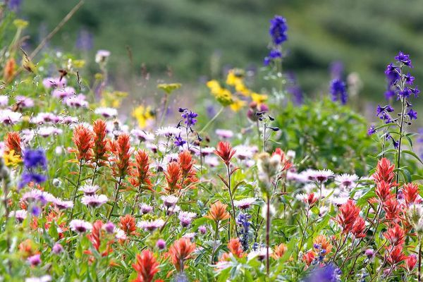 Jardins extraordinaires à découvrir pour la bonne cause