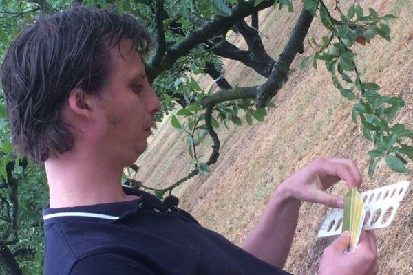 Quentin Hoffmann, directeur de l'AREF de l'Est mesure les mirabelles avec une règle de calibre.