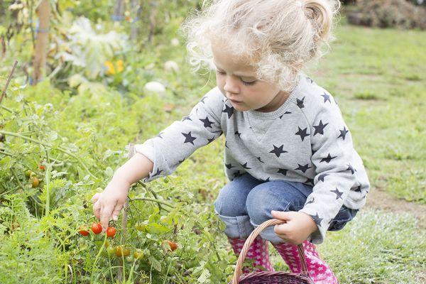 Initiez-vous au jardin en cinq conseils, un jeu d'enfants ?