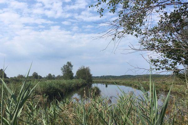Le Parc Naturel régional Médoc s'appuie sur des atouts environnementaux (ici une zone humide près d'Hourtin) préservant la biodiversité mais aussi sur le développement économique et social des zones rurales.